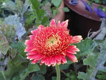 Flowers in hotel garden2